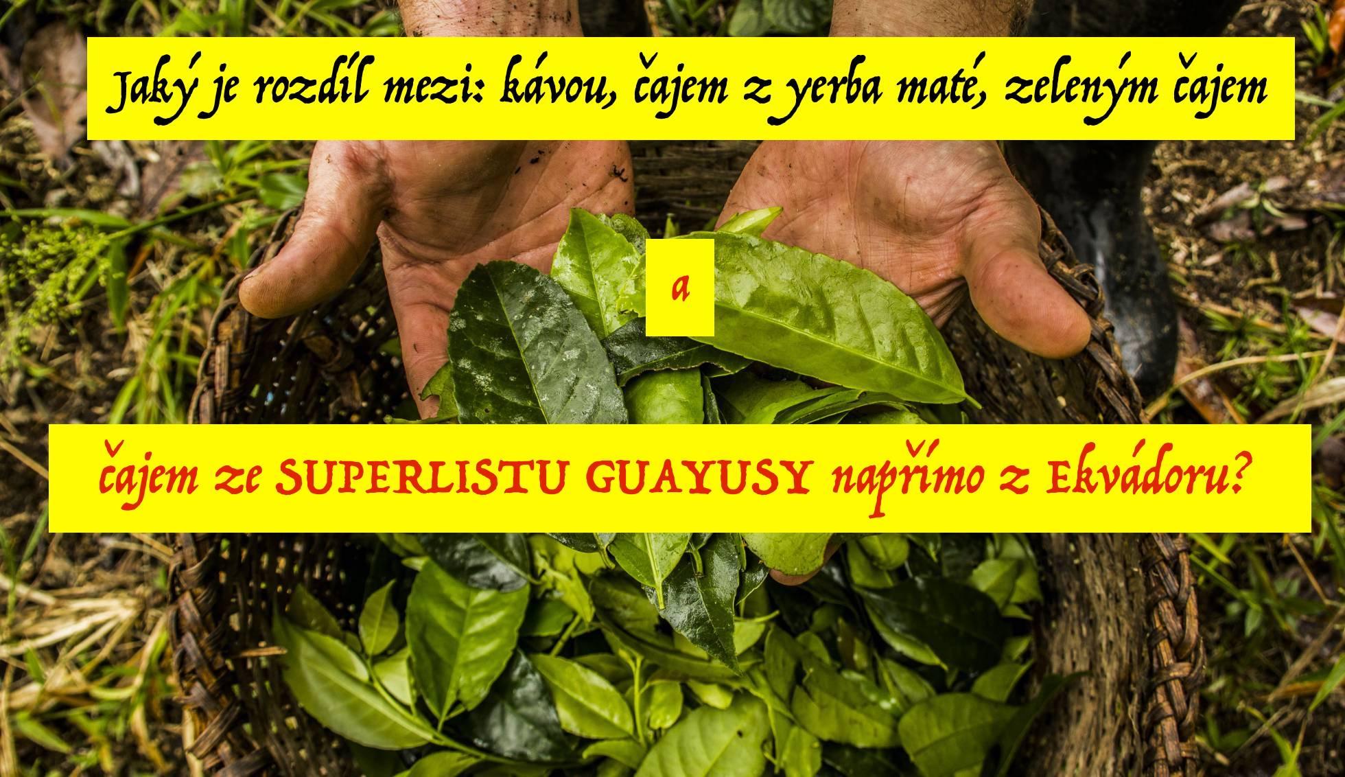 Rozdíl mezi guayusou (wayusou), kávou, yerba maté a zeleným čajem