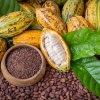 Kakaové boby, kakaový prášek