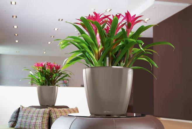 classico-ls-kvetinac-lechuza-kvety