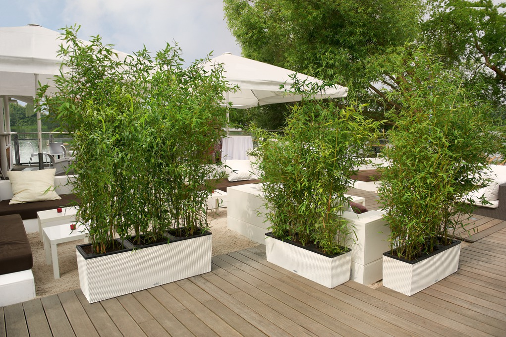 trio30,40-biela-bambus
