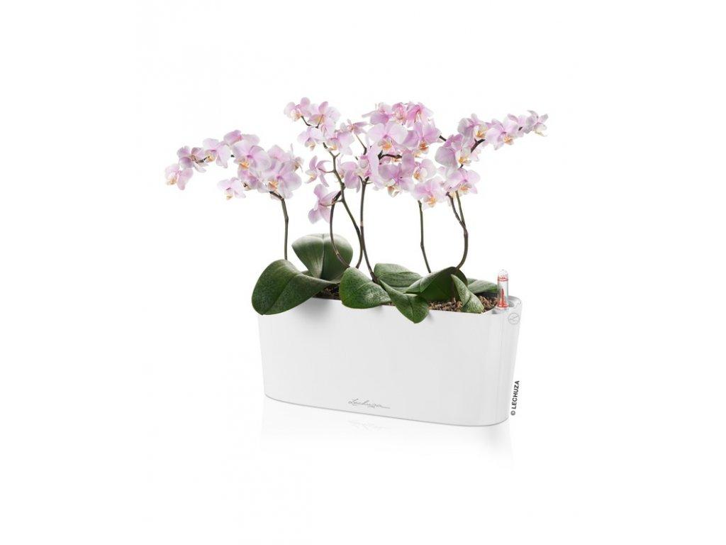 delta10 kvetinac lechuza