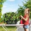 cascada lechuza jahody