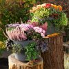cascada lechuza kvetinac1