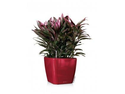 quadro28 cervena kvetinac