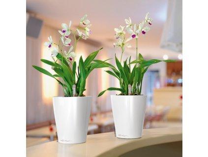 deltini lechuza biela orchidea