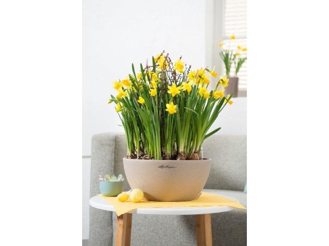 cubeto lechuza kvetinac pieskova
