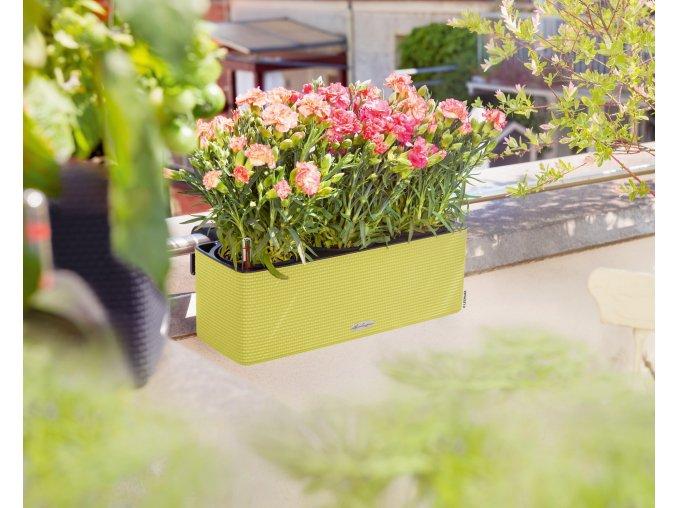 balconissima kvetinac lechuza
