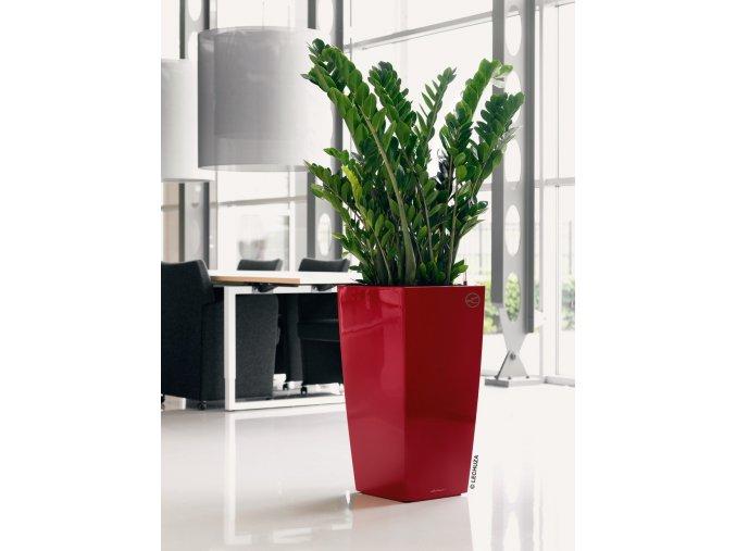 cubico cervena kvetinac lechuza