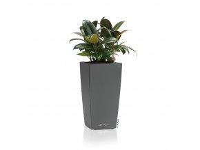 Maxi cubi Ficus