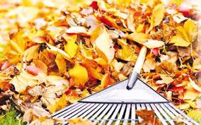 Rady a typy na podzimní úklid na zahradě