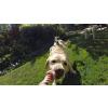 GOPRO Fetch (psí postroj) + nástavec k uchycení kamery