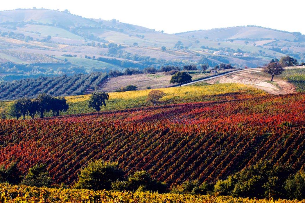 Bílé víno, jeho výroba a odrůdy