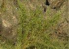 Divoké keře, vysoká tráva