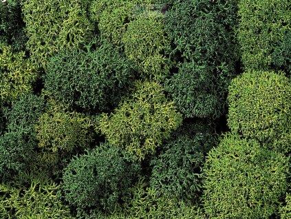 Mech - světle a tmavě zelený / NOCH 08610