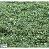 Naturex - jemný - zelený mix / Polák model 9066