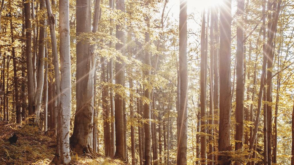 Slunce, náš zdroj energie