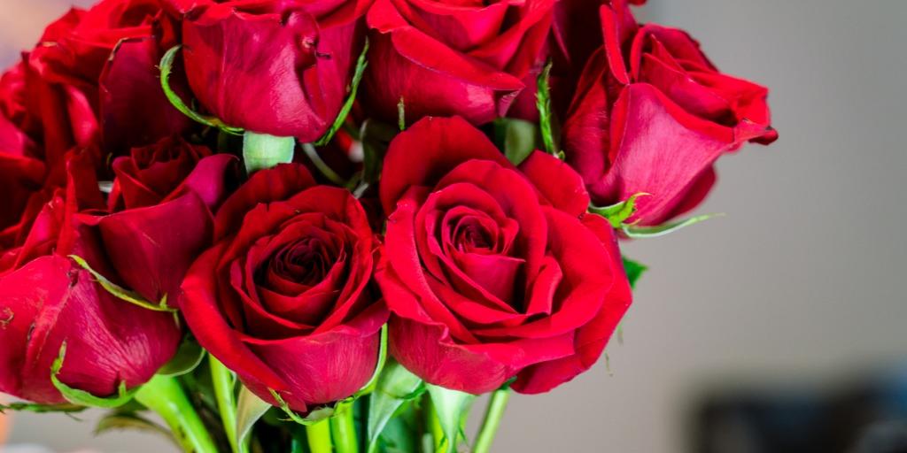 Druhy růží: Kdy a jak jednotlivé druhy růží stříhat