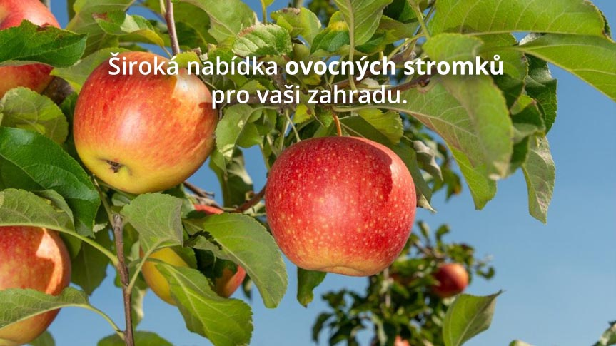 ovocne stromky