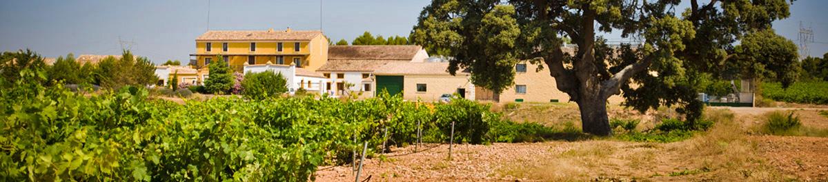 Bodegas_nodus_winery_field