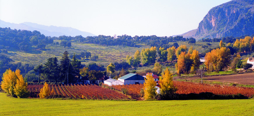 Frank-Schatz-winery