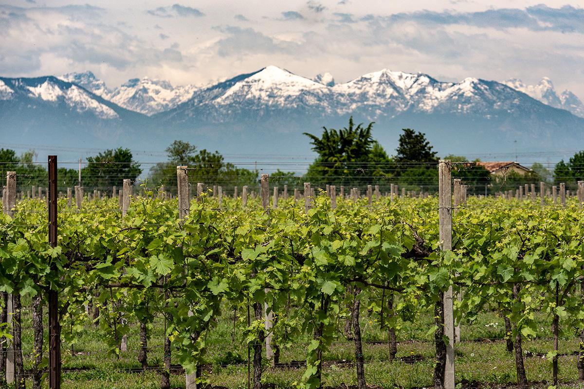 wine-yard-terre-dei-buth