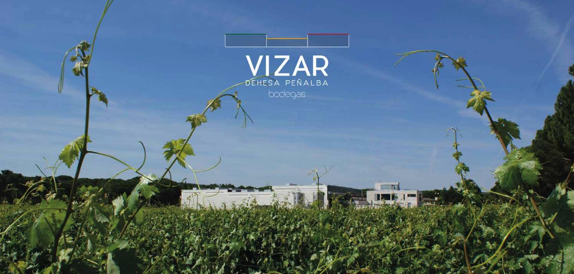 wine-yard-vizar