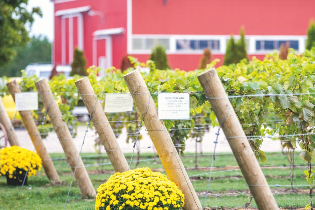 winery-images-innaugural-wine-plant-1024x683
