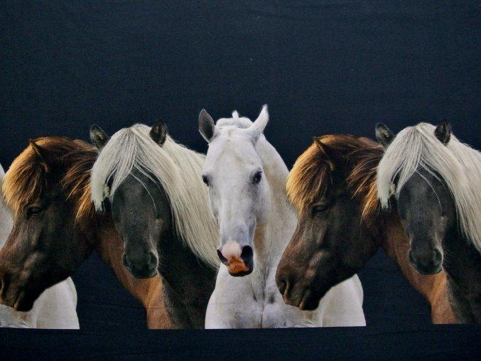 Elastický úplet koně na temně modré  (digitisk - bordura) - zbytek S VADOU