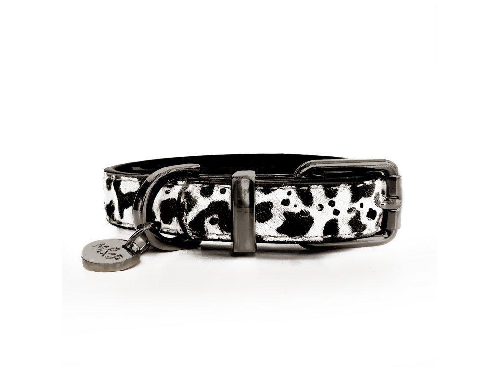 Dalmatien Collar 1