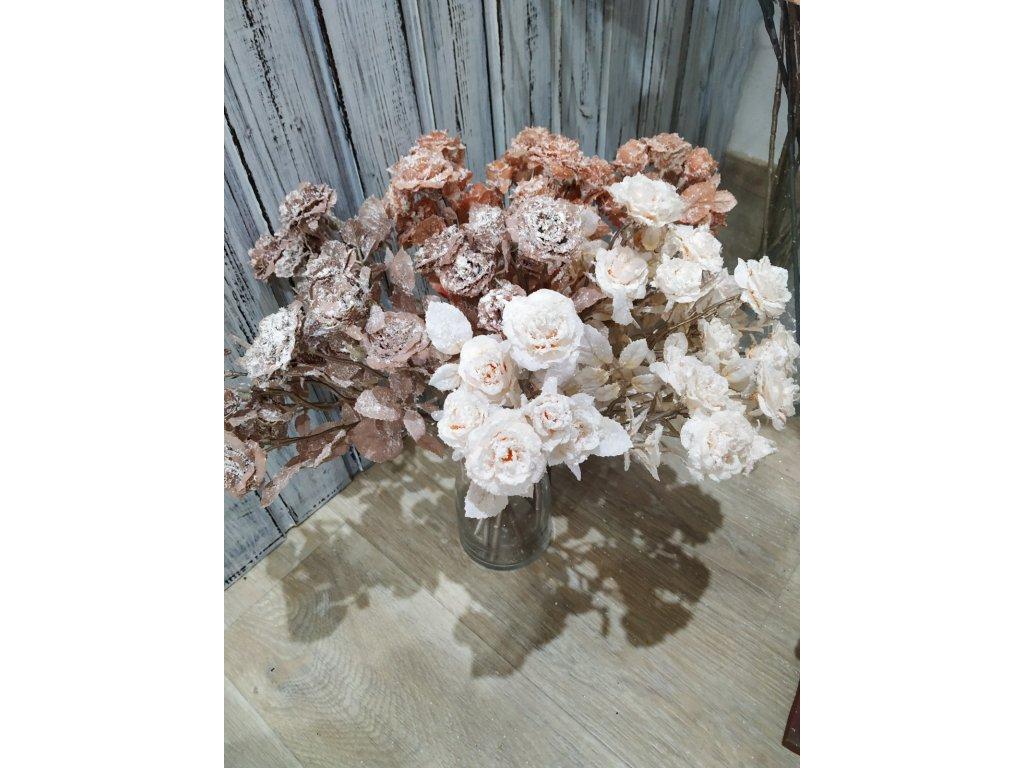 mini růže   meruňková