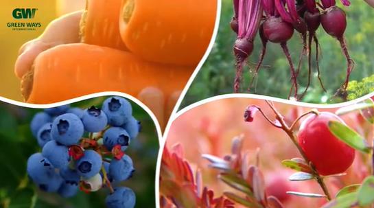 Barevné produkty - borůvka, brusinka/klikva, červená řepa, mrkev
