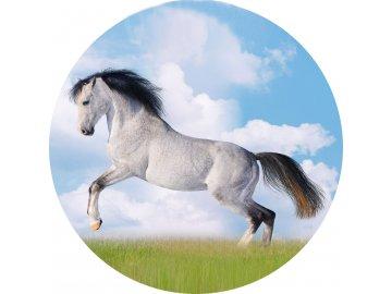 Koně - Jedlý obrázek - OK1