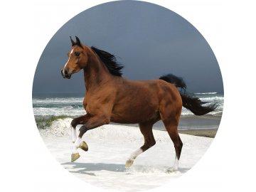 Koně - Jedlý obrázek - OK11