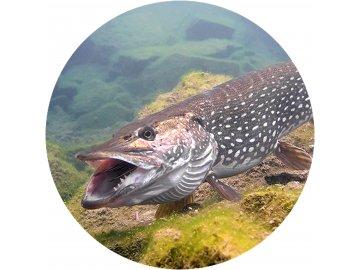 Ryby - Jedlý obrázek - RB3