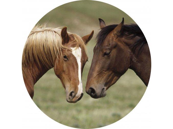 Koně - Jedlý obrázek - OK4