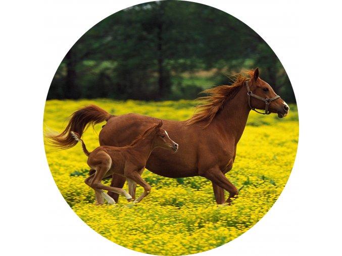 Koně - Jedlý obrázek - OK12