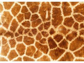 žirafa296