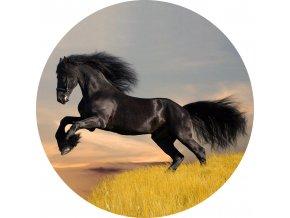 Koně - Jedlý obrázek - OK2