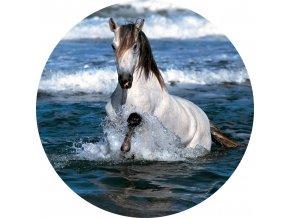 Koně - Jedlý obrázek - OK7