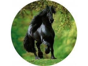 Koně - Jedlý obrázek - OK8