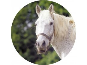 Koně - Jedlý obrázek - OK14
