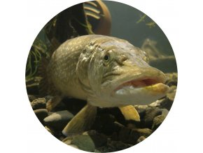 Ryby - Jedlý obrázek - RB4