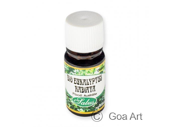401568 Eukaliptus radiata