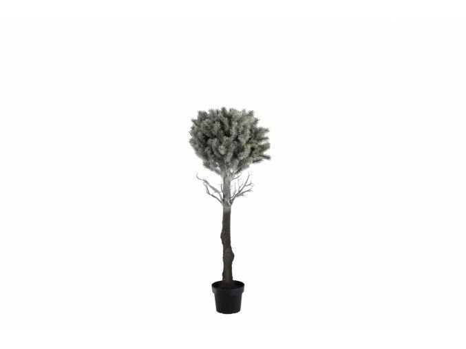 Strom v květináči