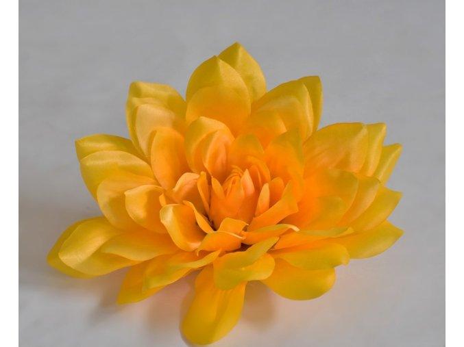 Květy Dahlia žlutá
