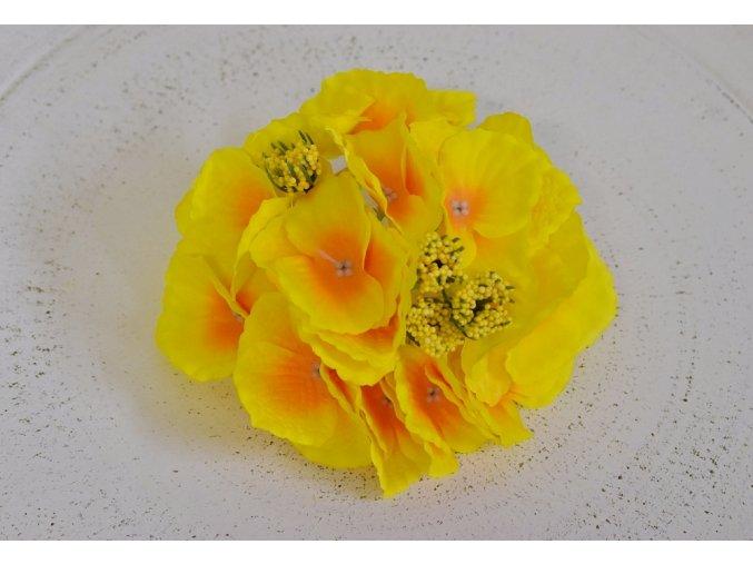 Květenství hortenzie žluté
