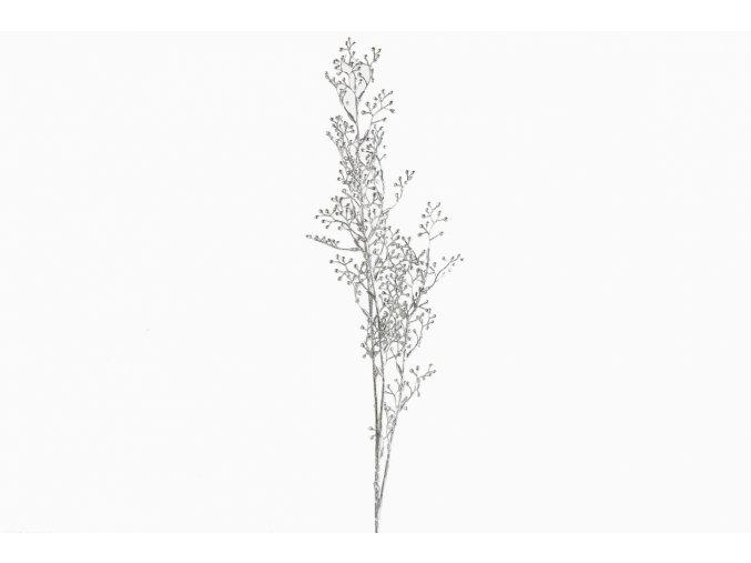 Rumex acetosa, silver 81 cm