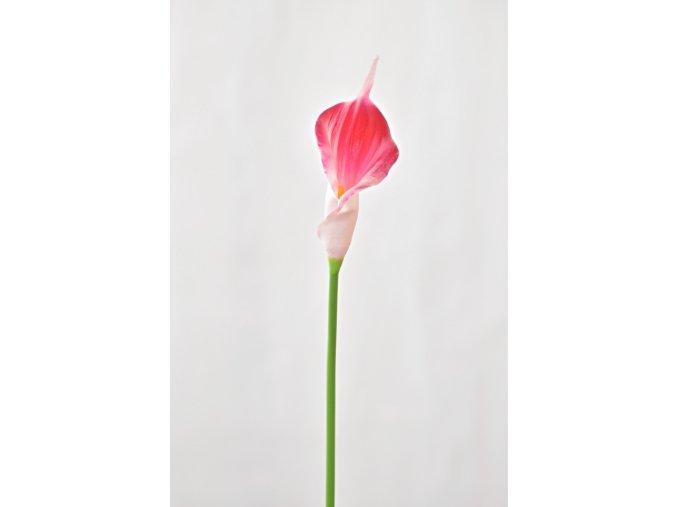 Umělá kala růžová, 41 cm