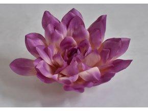 Květy Dahlia fialová