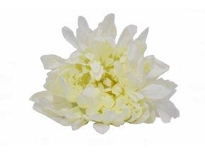Vazbová chryzantéma 15 cm, bílá